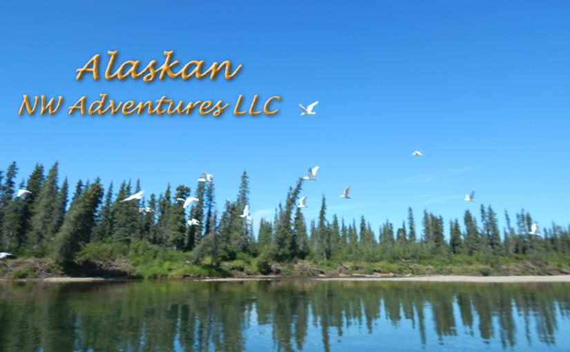 Wildlife-in-Alaska