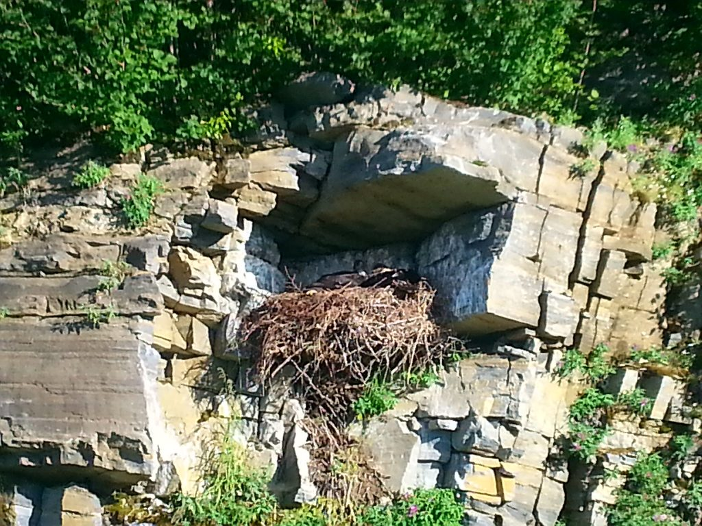 Eagels Nest