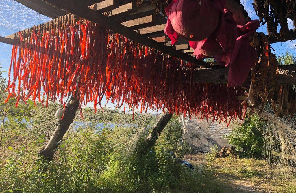 Salmon Drying- Eskimo Culture