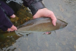 Grayling Fishing
