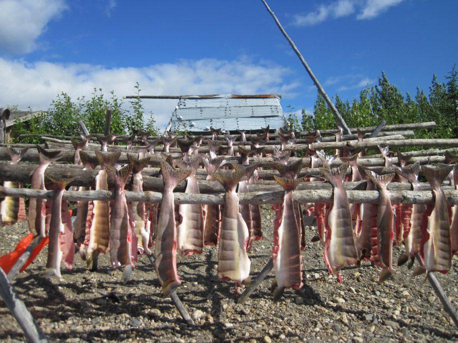 Summer fish Drying
