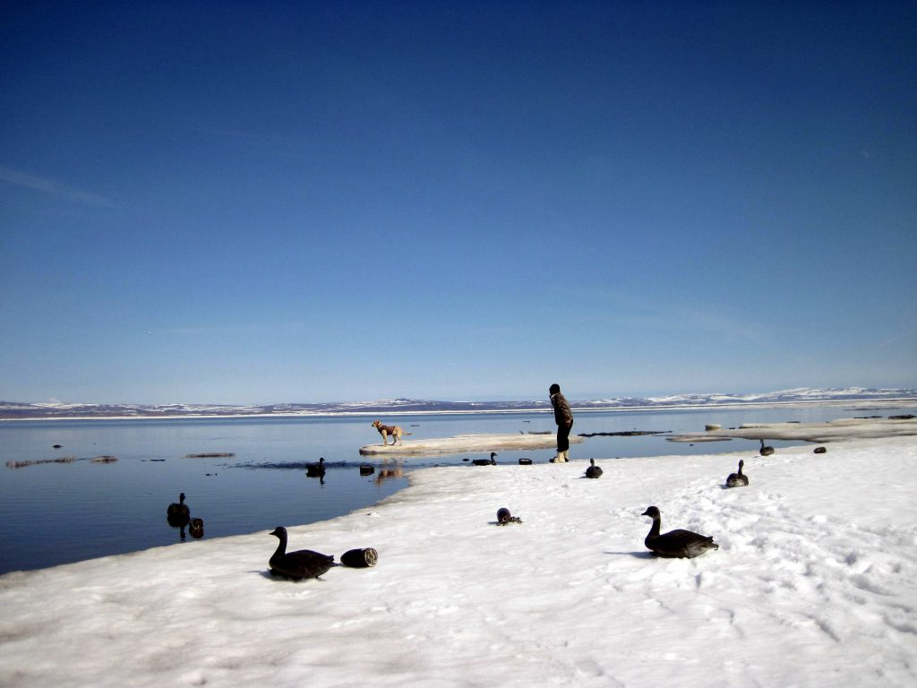 winter fowl-ALASKAN WILDERNESS AND CULTURAL TOURS