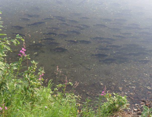 River Full of Fish