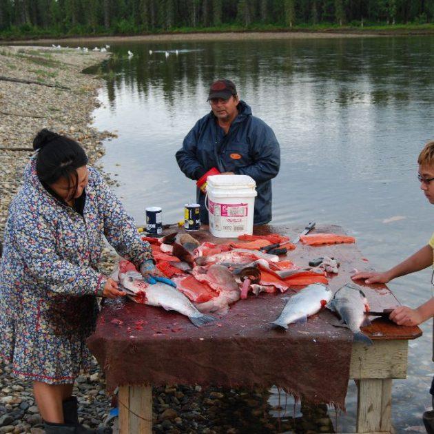 Salmon on the Niukluk River