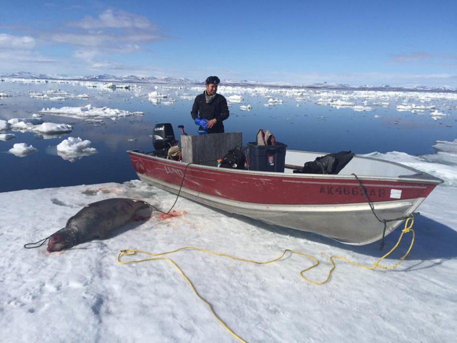 seal-hunting